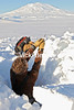 Man Digging Snow Cave with a Spoon, Antarctica