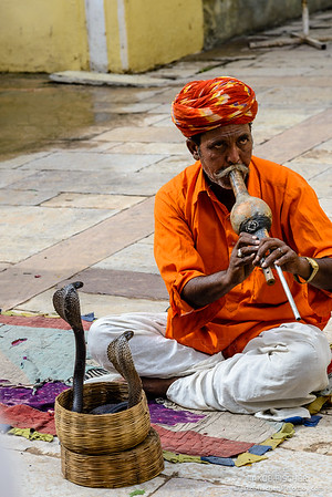 Snake charmer, Jaipur