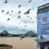 Birds all over Puskar Lake