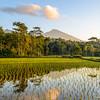 Rice Terraces at sunrise in Tetebatu
