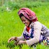 Indonesian farmer planting rice saplings
