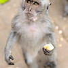 Monkey waiting for more bananas