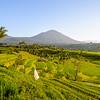 Rice terraces of Jatiluwih, Bali