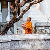 Monk with frangipani flowers