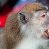 sneaky monkey