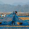 Burmese women drying fresh fish