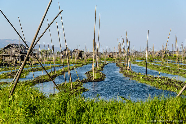 Floating gardens at Inle Lake