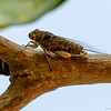 Cricket on a branch