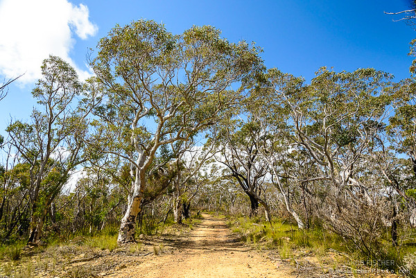 trekking path to Baltzer Lookout