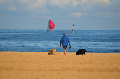 Dog Walker on Brighton Beach