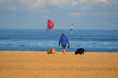 Dog Walker on Brighton Beach