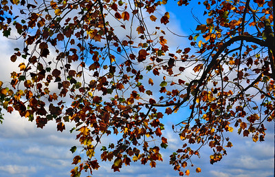 A Sky Full Of Leaves