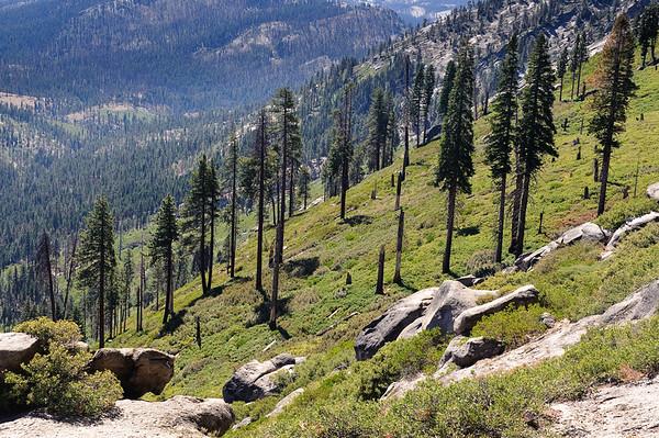 Treeline at Glacier point, Yosemite