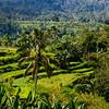 Bali 16 - 115