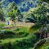 Bali 16 - 122