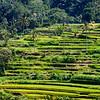Bali 16 - 107