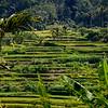 Bali 16 - 112