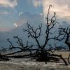 Hunting Island Boneyard