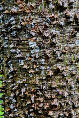 Punta Gorda;Belize; Ixcacao Maya Belizan Chocolate Farm