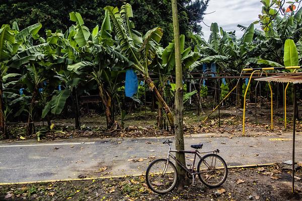 passing a banana farm seeing a banana convayor.