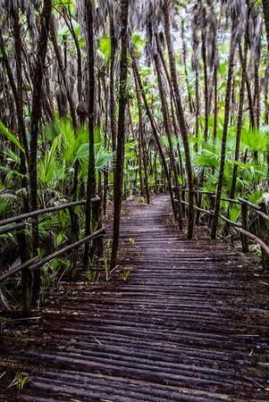 Belize; Belize City; Bacab Eco Park