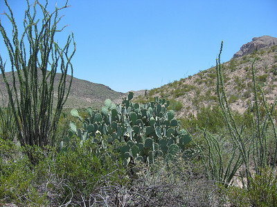 Big Bend National Park, Texas (21)