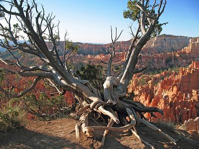 Bryce Canyon, Utah (6)