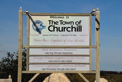 It is estimated that around 1200 Polar Bears make the Churchill area their home