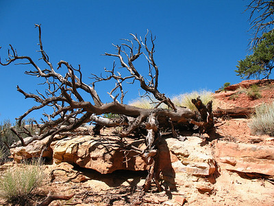 Capitol Reef National Park, Utah (Cassidy Arch Trail) (7)