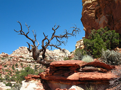 Capitol Reef National Park, Utah (Cassidy Arch Trail) (2)