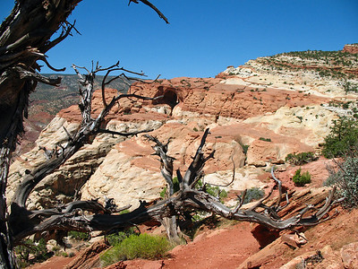 Capitol Reef National Park, Utah (Cassidy Arch Trail) (1)