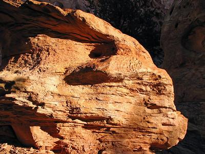 Capitol Reef National Park, Utah (Cohab Canyon Trail) (9)