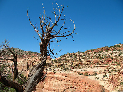 Capitol Reef National Park, Utah (Cassidy Arch Trail) (6)