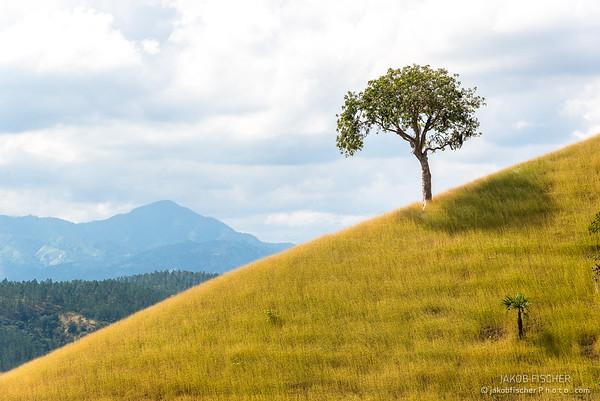 single tree on a grassy hill