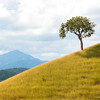single tree on a grassy hill
