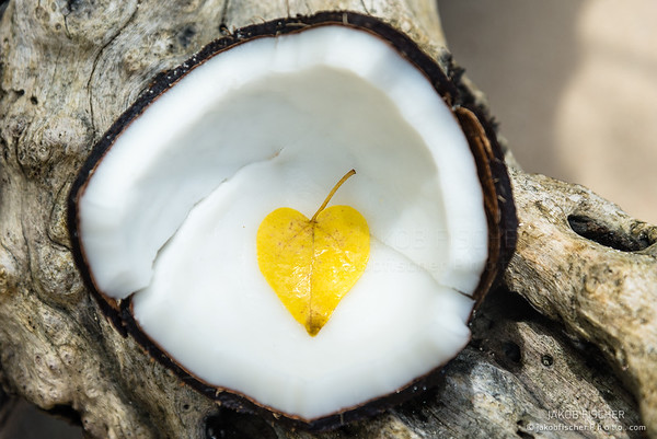 heart shaped yellow in a coconut