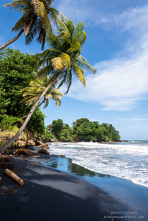 black sanded beach with palm trees