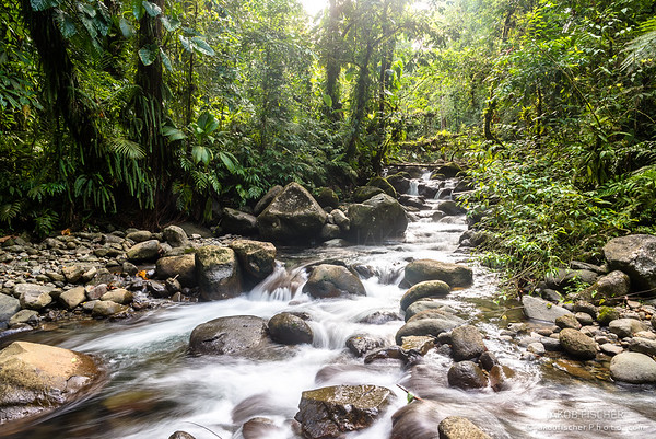 wild stream in the rainforest of Guadeloupe