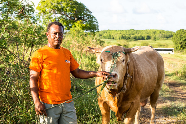 creole with steer