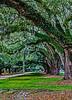 USA; South Carolina; Charleston; Boone Hall Plantation