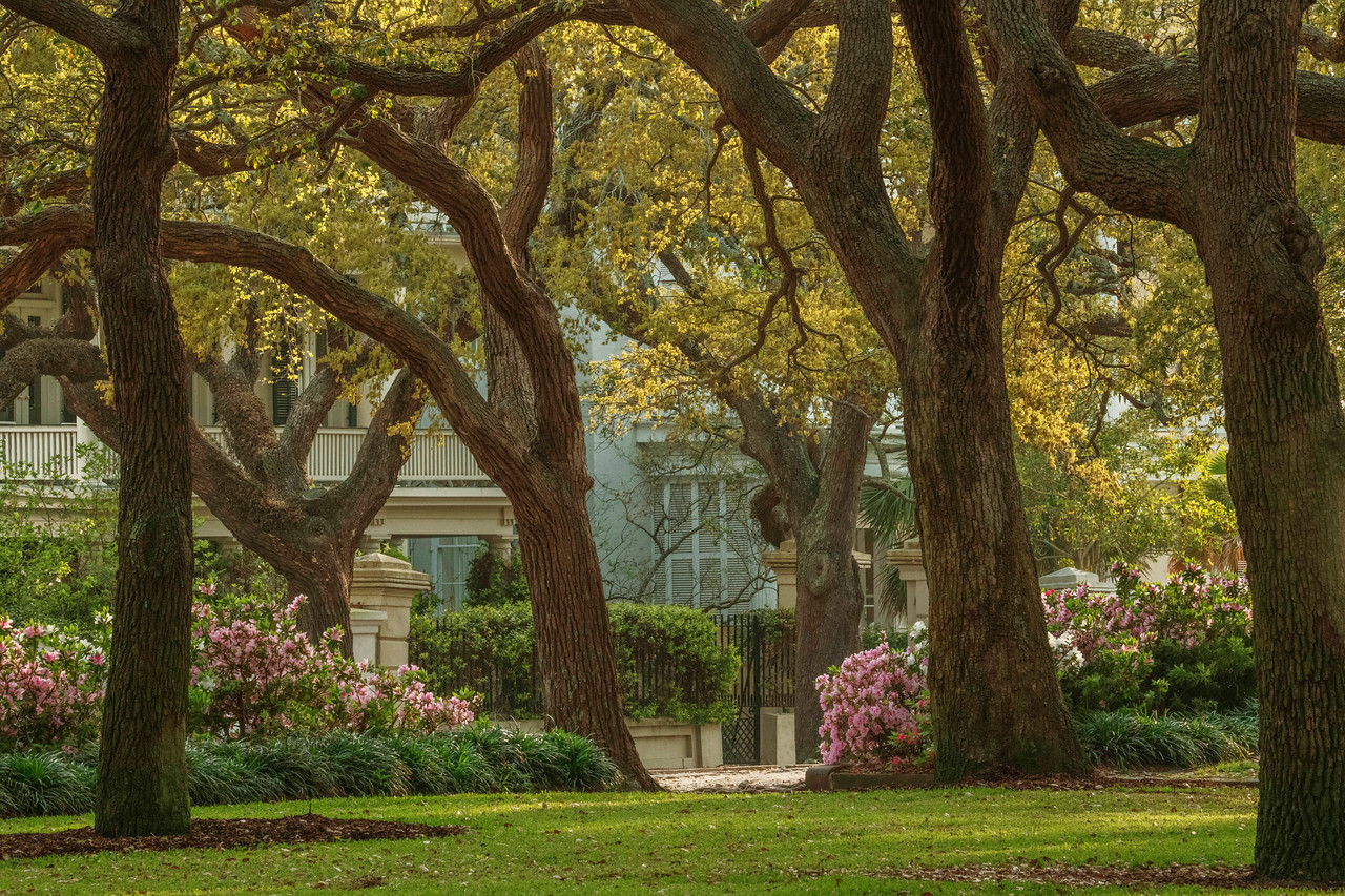 Photographing in Downtown Charleston - Travel Obscura
