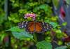 Mackinac Island; Michigan; USA; Wings of Mackinac butterfly conservatory