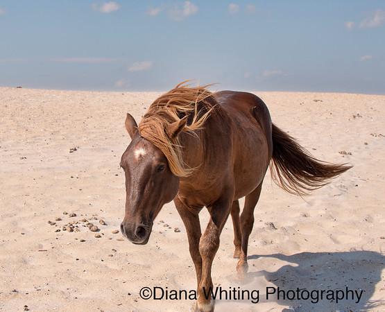 Wild Horse on Beach