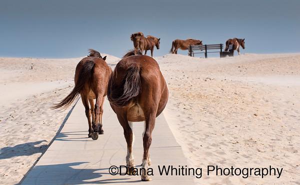 Beach Time_DSC9969 copy