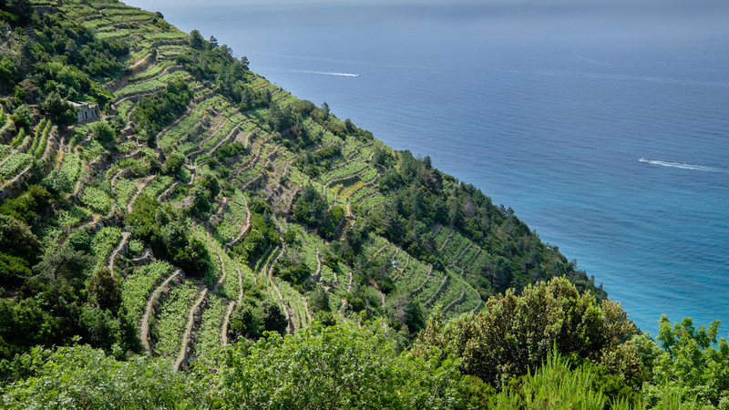 The green fields of Cinque Terre