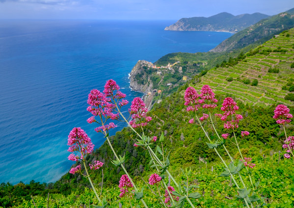 View on Corniglia