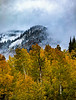 USA; Colorado; Crested Butte; Ohio Pass