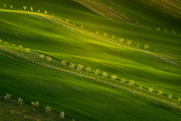 Lime Light  || Moravia, Czech Republic