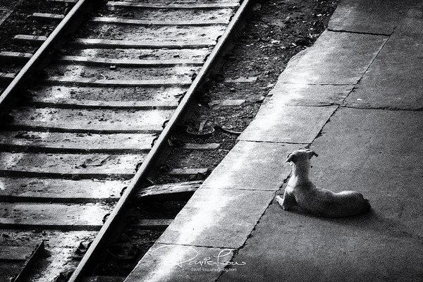 Hachiko - the Indian version of a faithful Japanese dog waiting daily for the return of his master, New Delhi train Station