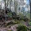 Parfrey Glen Stairway